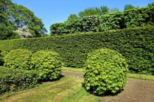 shorn-hedge-3392367_1920